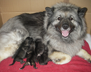 Olympias litter, day 1