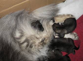 Olympias litter, day 2